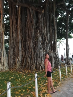 One of many Banyon trees in Waikiki