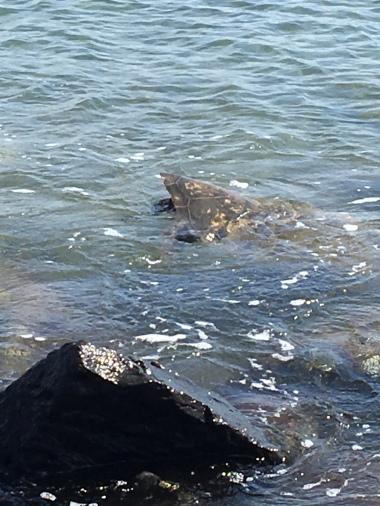 Turtles at Haycraft