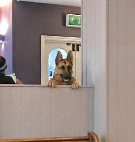 Cirencester - The Crown pub is pet friendly