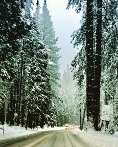 Gigantic trees
